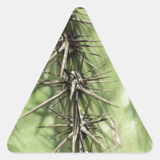 macro close up of cactus thorns triangle sticker