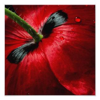 macro close up photography rose photo print