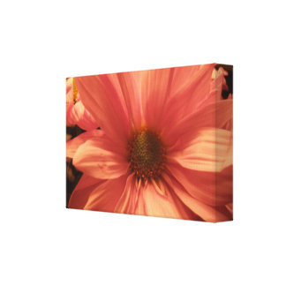 Macro Daisy Stretched Canvas Prints