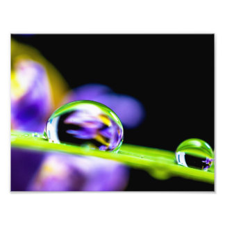 Macro Drop of Water on Blade Grass Purple Flower Art Photo