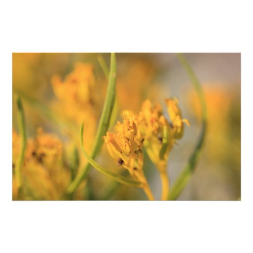 Macro Flora Stationery