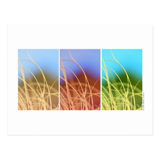 Macro Grass Trio Post Cards
