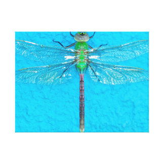 Macro Green Dragonfly on Blue Background Gallery Wrapped Canvas