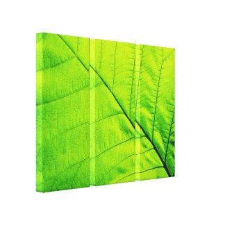 Macro Green Leaf Wrapped Canvas Stretched Canvas Prints