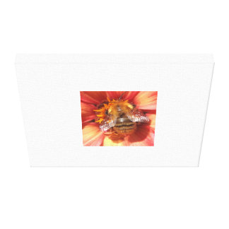 Macro image of a bumble bee High quality Stretched Canvas Prints