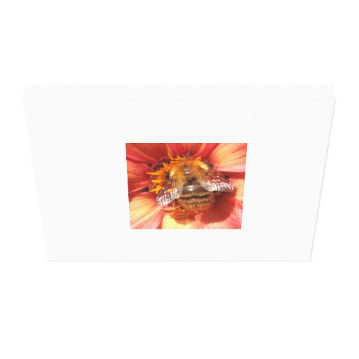 Macro image of a bumble bee. High quality. Stretched Canvas Prints