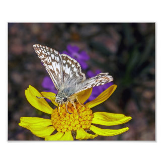 Macro of a Skipper Butterfly on a Yellow Flower Photo Print