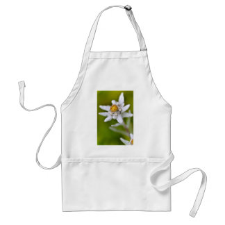 Macro of edelweiss flower standard apron