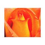 Macro Orange and Yellow Rose