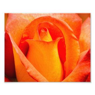 Macro Orange and Yellow Rose Photograph