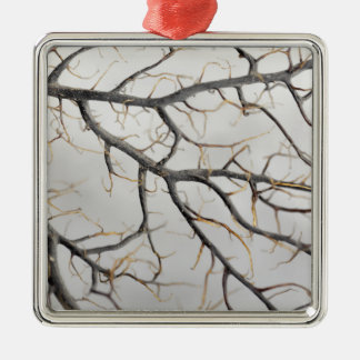Macro photo of a dry gorgonian coral. metal ornament