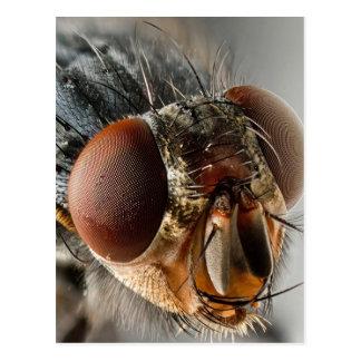Macro photo of a fly postcard