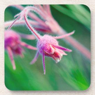 Macro photo of prairie flowers in Montana Drink Coaster