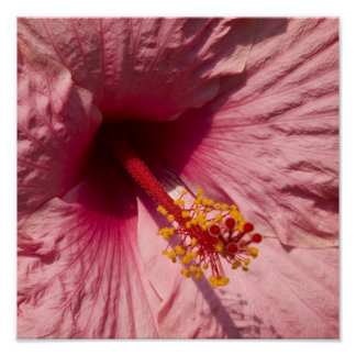 Macro Pink Hibiscus Flower Print