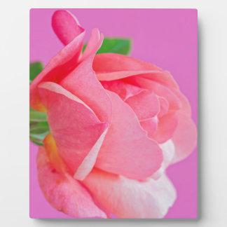 Macro pink rose flower plaque