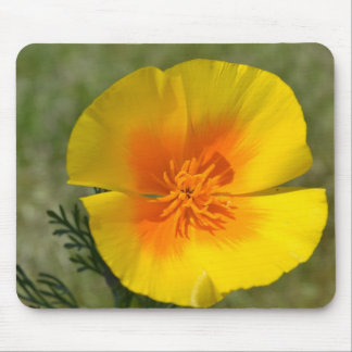 Macro Poppy Mouse Pads