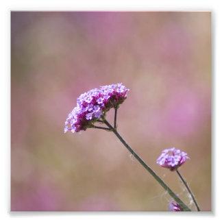 Macro Purple and Pink Flowers Photographic Print