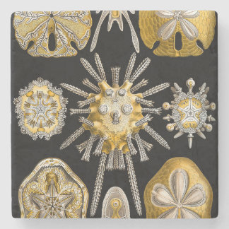 Macro Sea Creatures ~ Sea Urchins Stone Coaster
