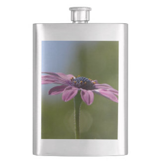 Macro Shot Of A Purple Osteospermum Hip Flask