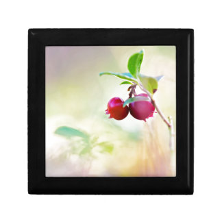Macro shot of cowberry growing in forest. gift box