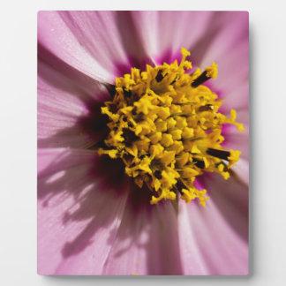 Macro shot of fresh pink flower plaque