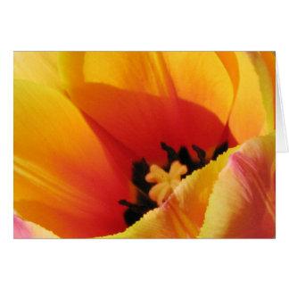 Macro Yellow Tulip Greeting Card