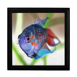 Macropodus opercularis – Paradise Fish Gift Box