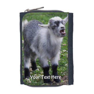 Mad Baby Pygmy Goat Photo  Wallet