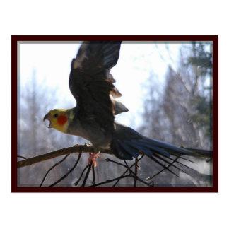mad bird Postcards