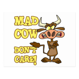 MAD COW DONT CARE FUNNY ANIMAL HUMOR POSTCARD