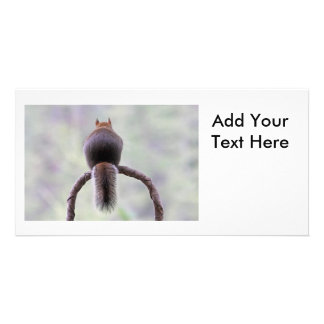 Mad Squirrel Picture Card
