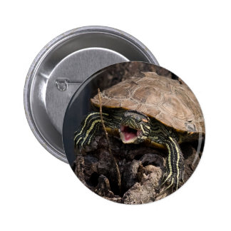 Mad Turtle Button
