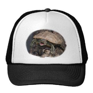Mad Turtle Hat