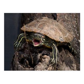 Mad Turtle Postcard