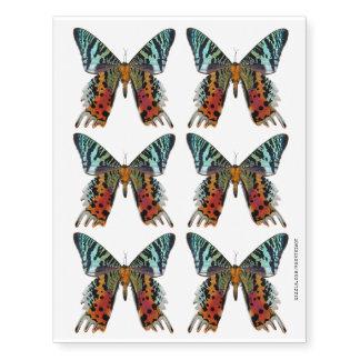 Madagascan Sunset Moth Rainbow Butterfly