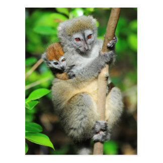 Madagascar, Andasibe, Ile Aux Lemuriens, Mother Postcard