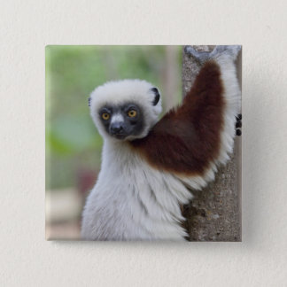 Madagascar, Ankarafantsika Reserve, Ampijoroa. 15 Cm Square Badge