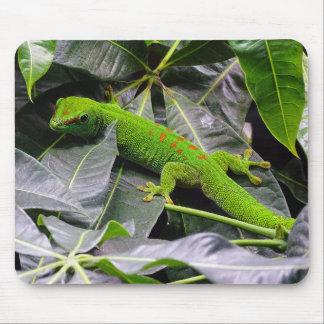 Madagascar day gecko mouse pad