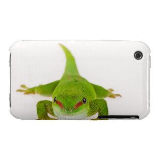 Madagascar day gecko (Phelsuma madagascariensis) iPhone 3 Cover