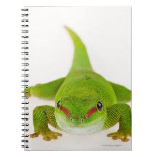 Madagascar day gecko (Phelsuma madagascariensis) Notebook