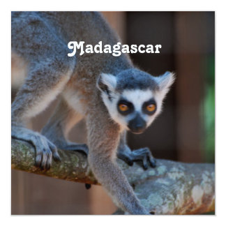 Madagascar Lemur 13 Cm X 13 Cm Square Invitation Card
