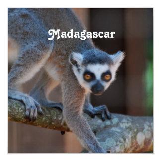 Madagascar Lemur Personalized Invites