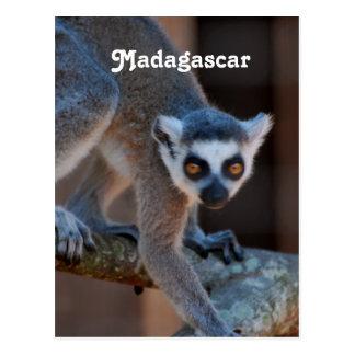 Madagascar Lemur Postcard