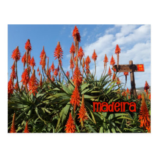 Madeira Aloe postcard, customize Postcard