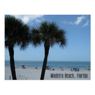 Madeira Beach Palms Postcard