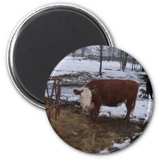 madison cow fridge magnets