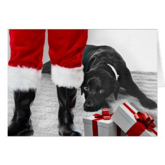 Madison the Black Labrador Christmas Card