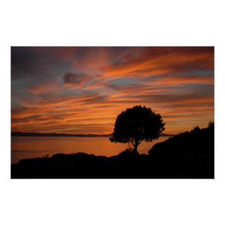 Madrone Sunset Poster