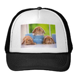 mag in rabbits cap
