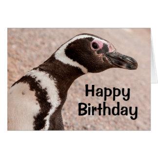 Magellanic Penguin, Patagonia, Argentina Card